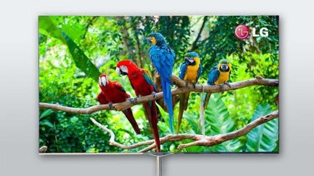 LG OLED TV zeigt 5 Papageien